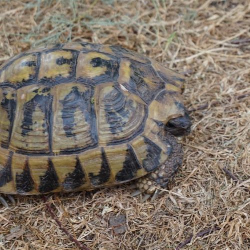 Eindruck Schildkröte 1
