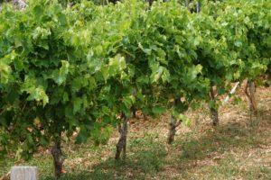 Eindruck Wein 1