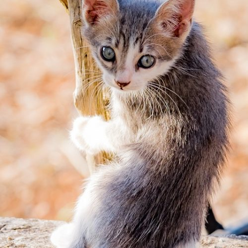 Eindruck Katze 1